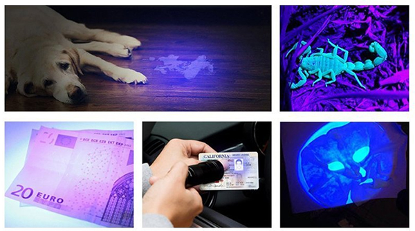 Φακός με Υπεριώδες Φως UV - 51 LED με Δώρο Γυαλιά Προστασίας, φακοσ, υπεριωδεσ, φωσ, uv, 51, led, δωρο, γυαλια, προστασιασ, fakos, uperiodes, fos, doro, gualia, prostasias